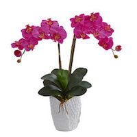 Phalaenopsis Perfection orchids of singapore perfume workshop team building ingredient singapore great scent fragrance